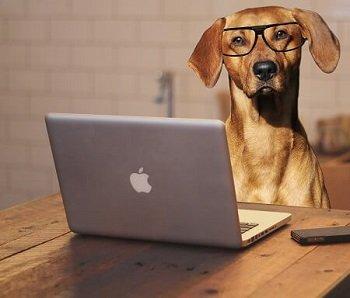 cane-con-pc-e-occhiali